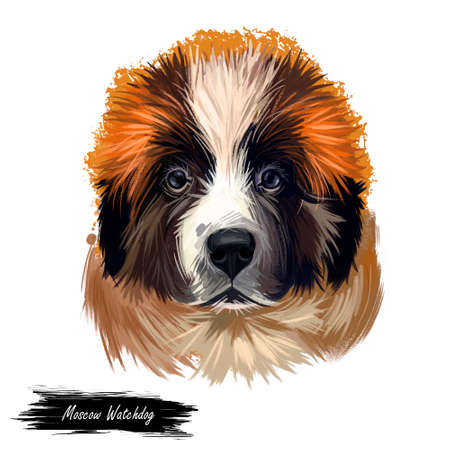 Moscow watchdog, Russian Moskovskaya storozhevaya sobaka digital art illustration. Russia originated pet of large weight and gentle temperament. Mountain dog canine powerful breed closeup portrait.