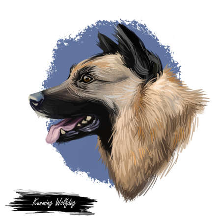 Kunming wolfdog, dog originated in China, digital art illustration. Chinese established breed, trained as military assistant and rescue animal. Pet with stuck out tongue on blue background. Stock Photo