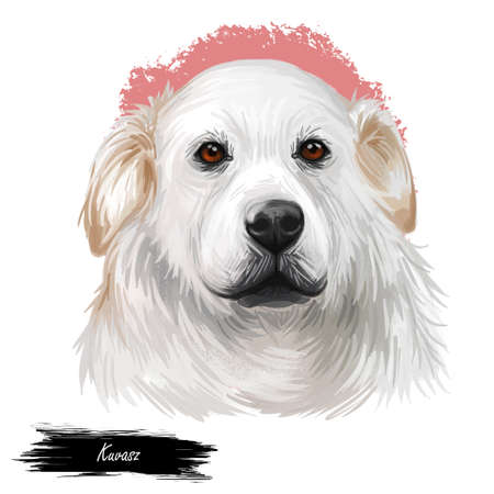 Kuvasz Hungarian ancient breed of livestock dog digital art illustration. Pet and guard dog, originated in Hungary as protector of farmers livestocks. Purebred animal puppy isolated portrait. Banque d'images - 109735696