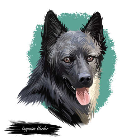 Lapponian herder dog canine closeup of pet digital art illustration. Lapinporokoira hound with stuck out tongue, lapsk vallhund originated in Finland. Portrait of puppy domesticated breed pet. Stock Photo