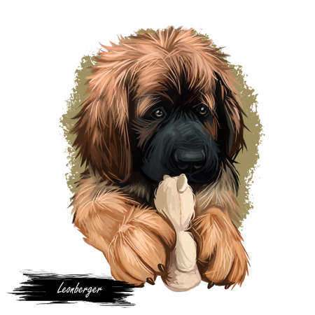 Leonberger puppy dog breed playing with toy digital art. German originated animal, domesticated mammal with playful mood. Giant purebred canis lupus, canine hound from Germany, watercolor portrait Banque d'images - 109705806