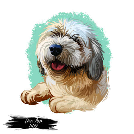 Lhasa apso puppy Tibetan long-haired purebred digital art. Poster with text and watercolor portrait of dog, domestic animal with long fur. Mammal showing tongue, friendly muzzle of pet doggy purebred