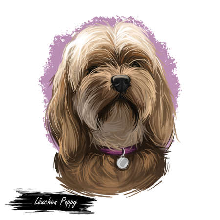 Lowchen puppy doggy petit chien lion digital art. French originated domesticated animal of small size. Toy and lap dog from France, canis lupus familiaris, watercolor portrait of pet wearing collar Banque d'images - 109705811