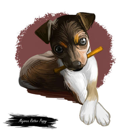 Majorca ratter puppy watercolor portrait closeup digital art. Pet domestic animal mammal playing with long stick, originated from Spain. Canine with playful mood and short muzzle, killer of rodents 스톡 콘텐츠
