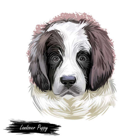 Landseer puppy muzzle watercolor portrait closeup digital art. Newfoundland dog from Canada, pedigree breed of large sizes, giant domesticated animal mammal with furry muzzle, canis lupus pet Stock Photo