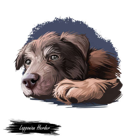 Lapponian herder puppy dog Reindeer pet digital art. Domesticated animal from Finland, Lapland mammal, lapinporokoira type of breed. Canine watercolor portrait close up, purebred doggish lapsk