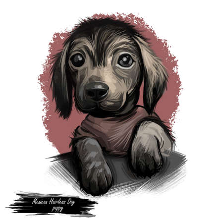 Dog Mexican hairless puppy small hound digital art
