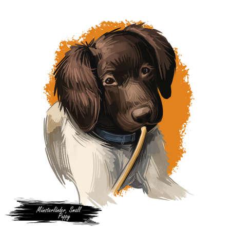 Munsterlander small dog, puppy of German breed digital art