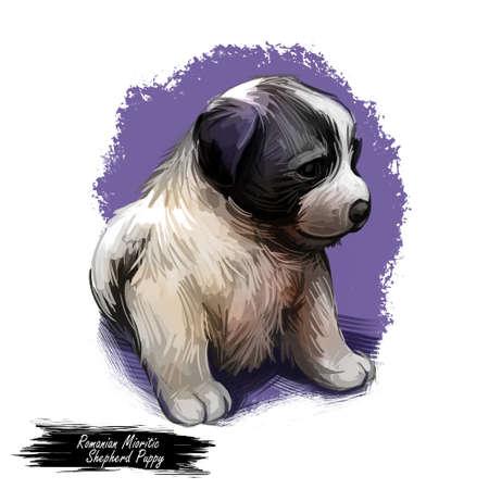 Romanian mioritic shepherd dog, hound from Carpathian mountains digital art