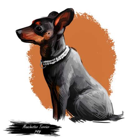 Manchester terrier dog wearing collar pet digital art Фото со стока