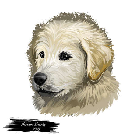 Maremma sheepdog guardian of livestock dog digital art