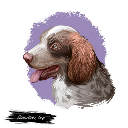 Munsterlander large dog breed, German purebred pet digital art Stok Fotoğraf