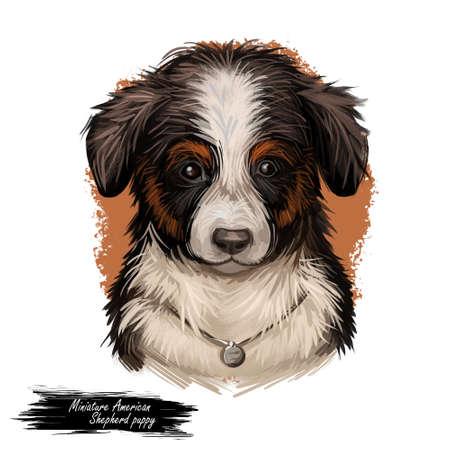 Miniature American shepherd MAS dog purebred digital art 写真素材