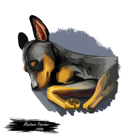 Miniature pinscher puppy, king of toys breed digital art Stok Fotoğraf