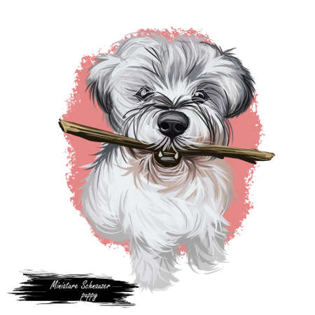 Miniature Schnauzer dog, zwergschnauzer dwarf puppy digital art