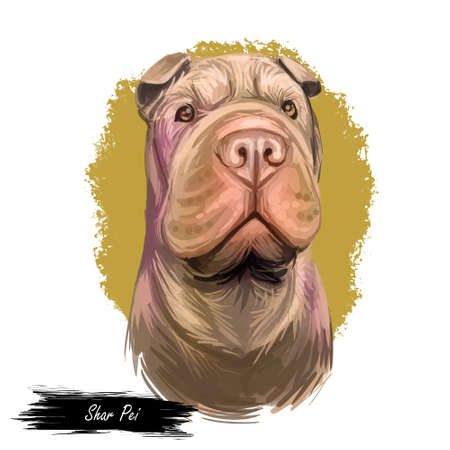 Shar Pei purebred type of dog originated from China digital art. Isolated watercolor portrait of pet close up, animal profile and text, hound breed