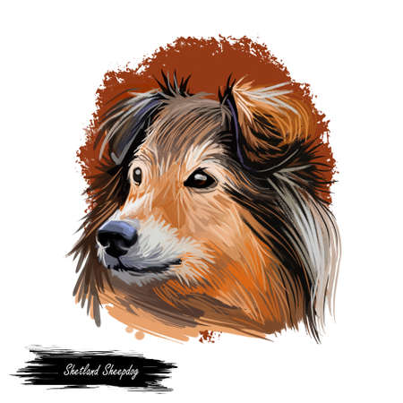 Shetland sheepdog purebred domesticated animal digital art. Canine watercolor portrait closeup, mammal with long fur, long-haired pet