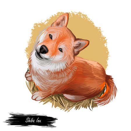 Shiba Inu Brushwood turf Japanese dog purebred digital art. Watercolor portrait of domesticad animal, mammal with smooth coat from Japan Stok Fotoğraf