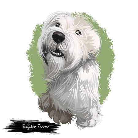 Sealyham Terrier toy god, pet of small size watercolor portrait digital art. Hand drawn domestic animal with long haired coat canine purebred Stok Fotoğraf