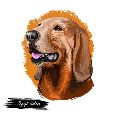 Segugio Italiano Italian breed of dog digital art. Isolated watercolor pet portrait of purebred domesticated animal originated from Italy
