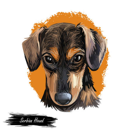 Serbian Hound pet digital art, watercolor hand drawn poritair of canine. Domestic animal from Serbia and Montenegro, Balkan puppy