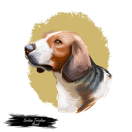 Siberian Tricolor Hound from Siberia dog breed digital art. Purebred domestic animal watercolor portrait close up