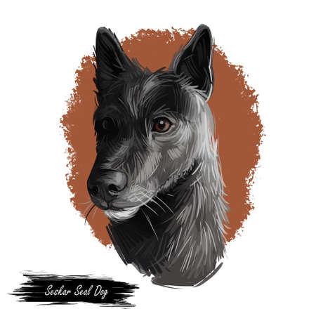 Seskar Seal dog hound animal digital art. Seiskarinhyljekoira pet originating from Finland, watercolor portrait closeup of Finish domesticated animal Imagens