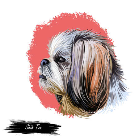 Shih Tzu lap dog toy pet digital art. Small Chrysanthemum breed watercolor portrait closeup, hand drawn muzzle of canine originated from China