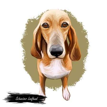 Schweizer laufhund dog animal breed with long ears German puppy digital art illustration. Pet of German origin doggy portrait canine hand drawn portrait