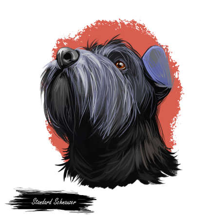 Standard Schnauzer Mittelschnauzer purebred domestic animal from Germany digital art. German doggy with long haired coat, watercolor portrait Stock fotó
