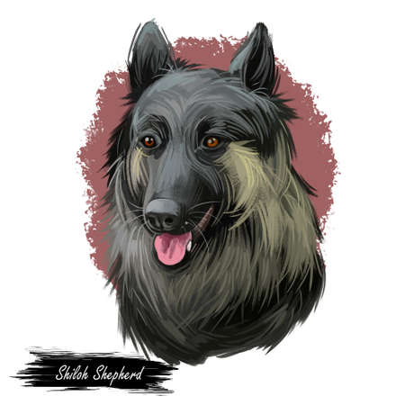Shiloh Shepherd dog sticking out tongue pet with long fur digital art. Animalistic hand drawn portrait watercolor style closeup