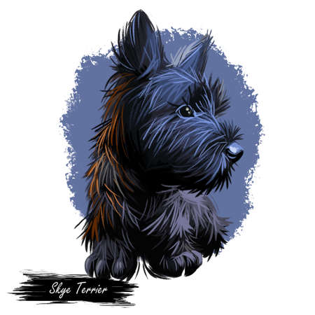 Skye Terrier lap dog tiny pet of small size digital art. Puppy looking in distance breeding domestic animal closeup watercolor portrait