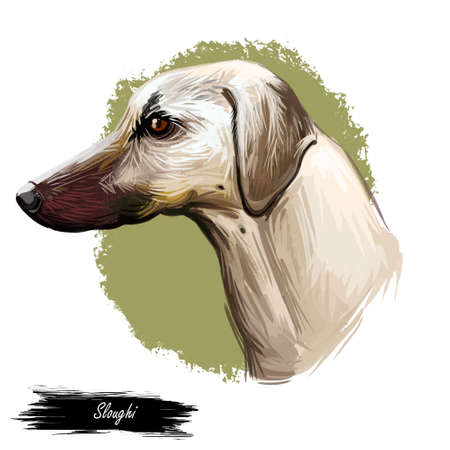 Sloughi dog hound originated from Africa digital art. Watercolor portrait of African pet with short haired coat, doggy with smooth fur and long muzzle Stok Fotoğraf