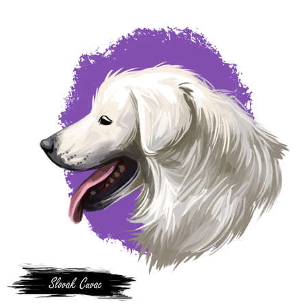 Slovak cuvac dog breed with long fur digital art. Watercolor portrait close up of domesticated animal sticking out tongue