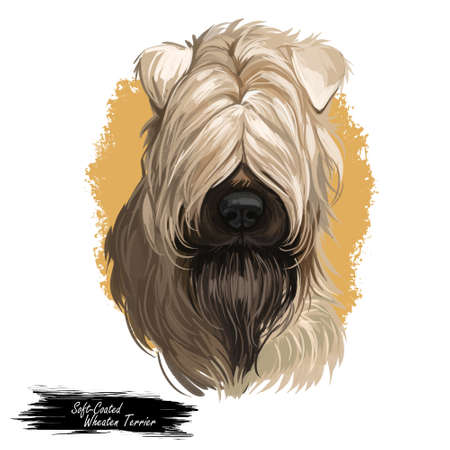 Soft coated wheaten terrier with long haired coat digital art. Closeup of watercolor portrait of pet with furry muzzle, hand drawn canine