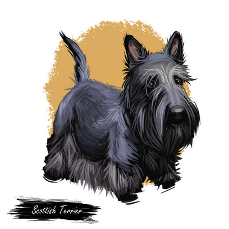 Scottish Terrier domestic animal originated from Britain Scolnad doggy digital art illustration . Doggy hand drawn clip art watercolor portrait