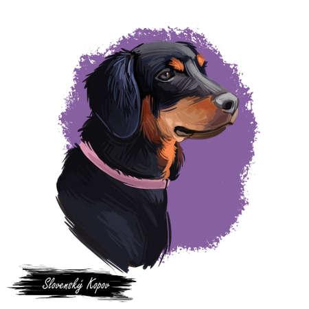Slovensky kopov slovak pet wearing collar on neck digital art. Watercolor portrait closeup of domestic animal from Slovak hound Stockfoto
