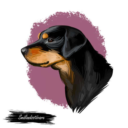 Smalandsstovare Smaland dog Swedish breed of dog digital art. Watercolor portrait of pet muzzle closeup, pet Scandinavian hound