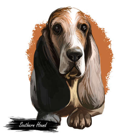 Southern Hound with haired coat, purebred animal digital art. Animalistic watercolor portrait closeup of muzzle of canine with long ears
