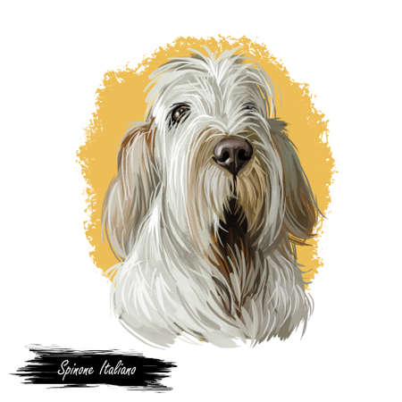 Spinone Italiano purebred dog with long haired coat digital art. Domestic animal with furry face watercolor pet portrait closeup Stock fotó