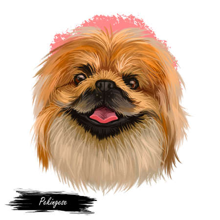 Pekingese dog portrait isolated. Digital art for web, t-shirt print and puppy food cover design, clipart. Toy breed, Beijingese, Peking Beijing Lion Dog, Chinese Spaniel, Pelchie, Peking Palasthund Zdjęcie Seryjne