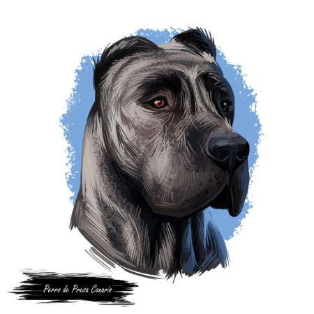Perro de Presa Canario dog portrait isolated on white. Digital art illustration web, t-shirt print and puppy cover design, clipart. Canary Mastiff, Canary Catch Dog, Canarian Molosser, Presa Canario