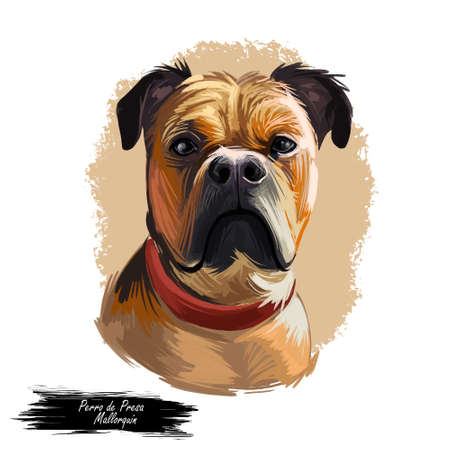 Perro de Presa Mallorquin dog portrait isolated. Digital t-shirt print and puppy cover design, clipart. Mallorquin Mastiff, Perro Dogo, Presa Canario Mallorquin, Majorcan Mastiff, Majorcan Bulldog Zdjęcie Seryjne