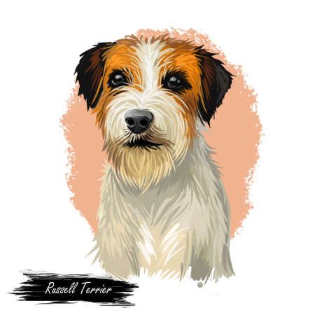 Russell Terrier dog portrait isolated on white. Digital art illustration for web, t-shirt print and puppy food cover design. F.C.I. Jack Russell Terrier with an instinct to hunt prey underground.