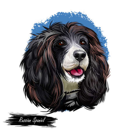 Russian Spaniel dog portrait isolated on white. Digital art illustration for web, t-shirt print and puppy food cover design. Rosyjski Spaniel, cross breeding English Cocker and Springer Spaniels Zdjęcie Seryjne