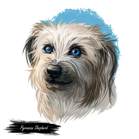 Pyrenean Shepherd dog portrait isolated on white. Digital art illustration for web, t-shirt print and puppy food cover design. Berger des Pyrenees, Pastor de los Pirineos, Petit Pyrenees Sheepdog