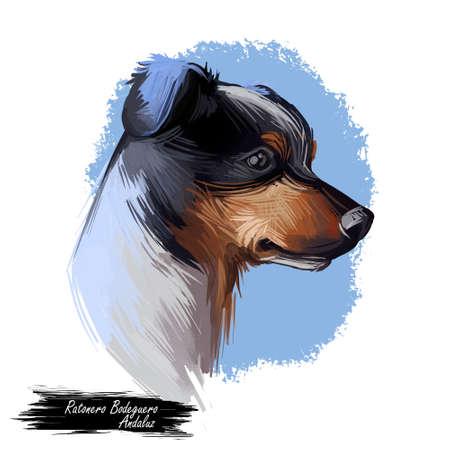Ratonero Bodeguero Andaluz dog portrait isolated on white. Digital art illustration o for web, t-shirt print and puppy food cover design. Perro Ratonero Andaluz, Andalusian Wine-Cellar Rat-Hunting Dog