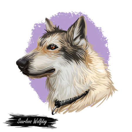 Saarloos Wolfdog dog portrait isolated on white. Digital art illustration for web, t-shirt print and puppy food cover design. Saarloos wolfhound, crossing of German Shepherd and Eurasian wolf. Stock Photo