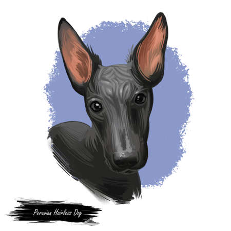 Peruvian Hairless dog portrait isolated. Digital for web, t-shirt print and puppy food cover design, clipart. Perro Sin Pelo de Peru, Inca Dog, Viringo, Peruvian Inca Orchid, Calato, Dielmatian.