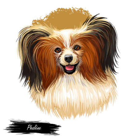 Phalene dog portrait isolated . Digital art illustration for web, t-shirt print and puppy food cover design, clipart. Epagneul Nain, Continental Moth-eared toy spaniel, drop-eared Papillion.